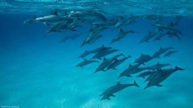 Séjour plongée en mer Rouge en Egypte à Hamata