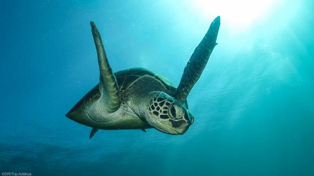 Séjour plongée au Mozambique