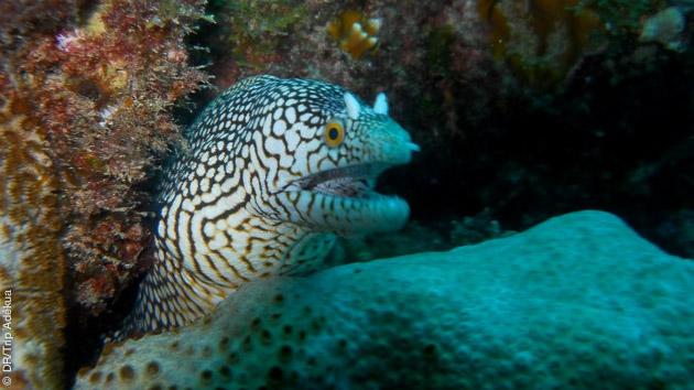 séjour plongée au Cap Vert