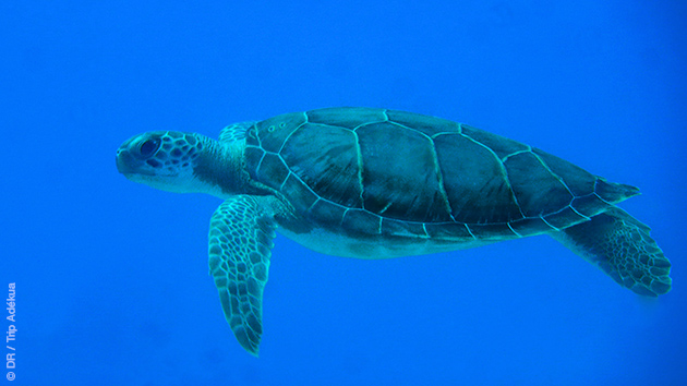 Plongées de rêve dans les eaux des Bahamas, à Cat Island