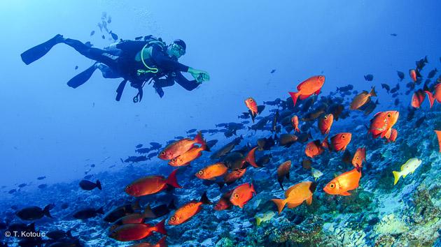 Séjour plongée en Polynésie française à Tahiti