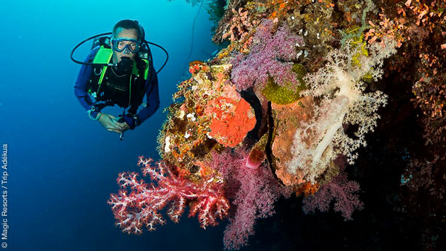 Symphonie de couleurs, calme et sérénité lors de vos plongées sur l'archipel des Visayas