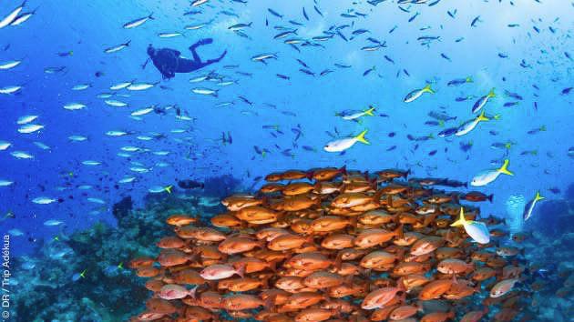 Croisière plongée itinérante en Papouasie Nouvelle Guinée