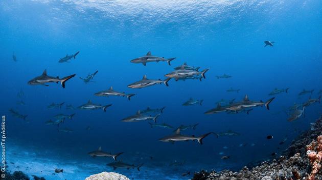 12 plongées de rêve en Polynésie Française, avec vols et hébergements