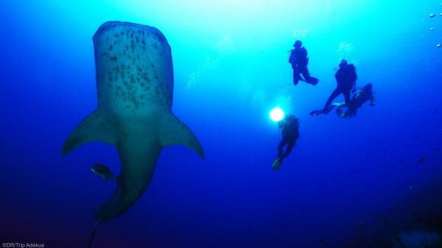 Découvrez les plus belles espèces marines des Philippines