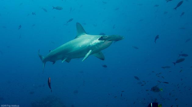 Votre croisière plongée dans l'archipel des Galapagos en Equateur