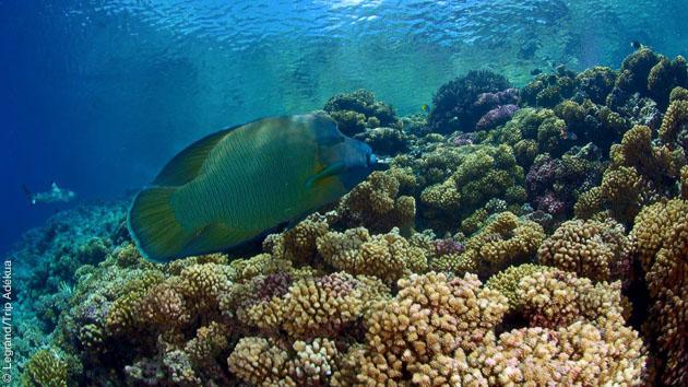 Plongées dans les eaux cristallines de la Polynésie Française