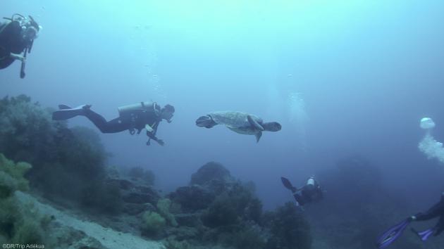 Un séjour unique pour plonger en Equateur