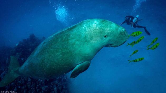Votre séjour plongée de rêve à la découverte de la mer Rouge en Egypte