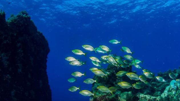 Votre séjour plongée dans l'archipel de Madère