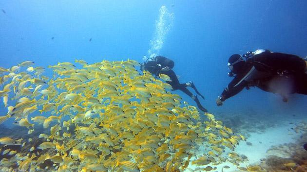 Des plongées de rêve dans l'Océan Indien pendant votre séjour à l'île Maurice