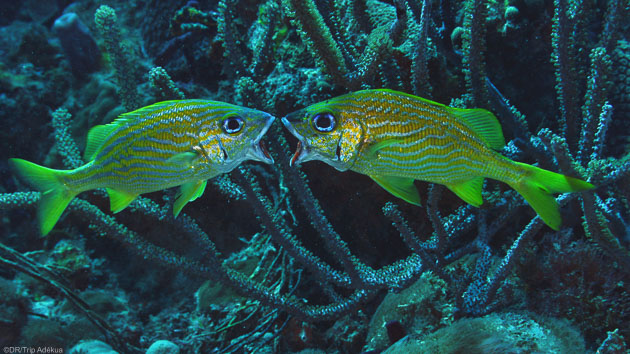 Votre séjour plongée de rêve aux Grenadines en mer des Caraïbes