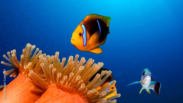Merveilles sous marines à découvrir lors de ce séjour plongée à prix malin en Polynésie Française