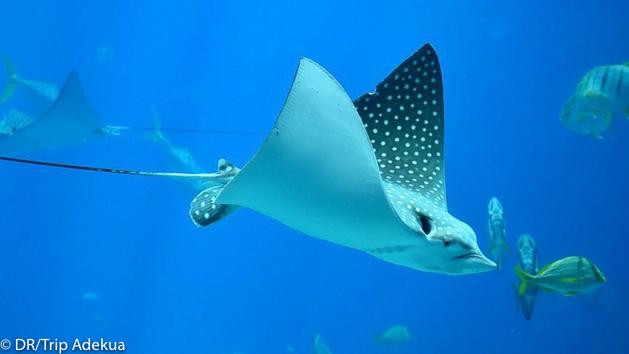 Votre séjour plongée pour découvrir les fonds marins du Belize