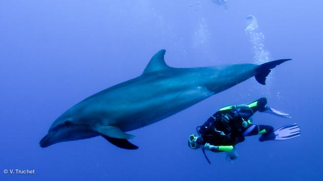 plonger avec les dauphins en Polynésie