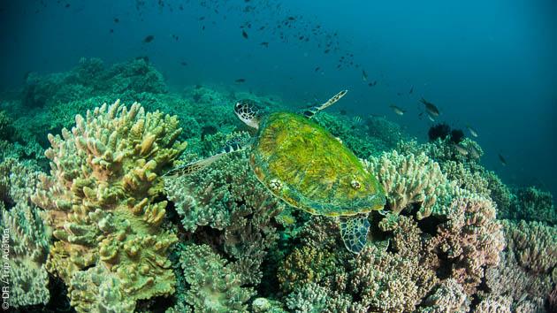 Superbe séjour plongée au Sultanat d'Oman, dans les eaux du Musandam