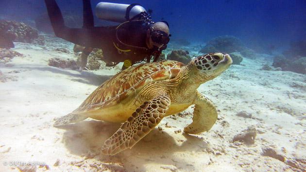votre séjour plongée avec les tortues en Indonésie