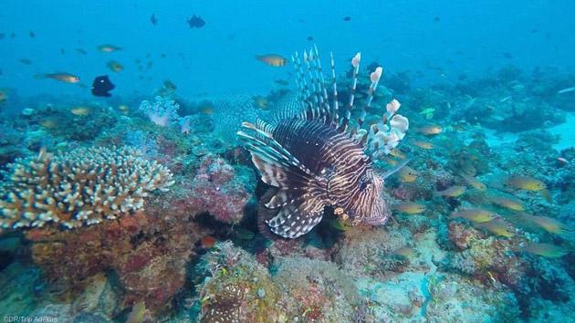 Votre séjour plongée à l'île Maurice