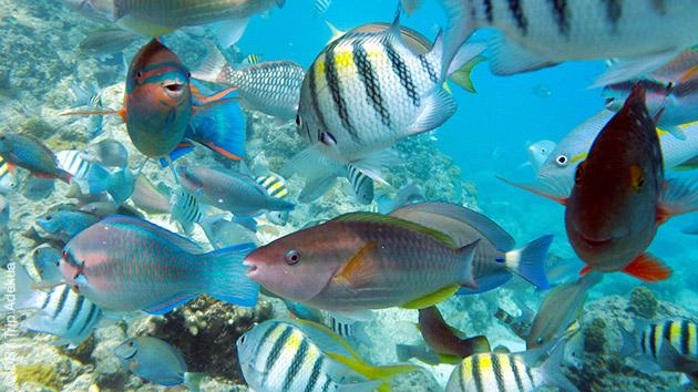 Une semaine de plongée à la Dominique, pour découvrir les fonds colorés