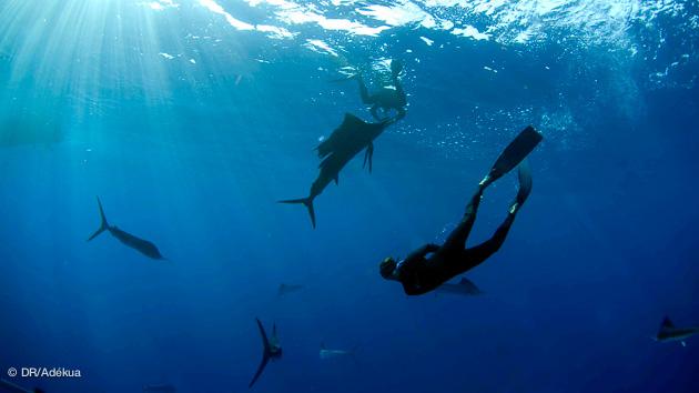 Plongez dans les eaux translucides de Playa del Carmen pour admirer les espadons voiliers