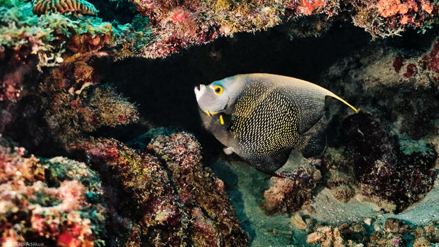 Un séjour plongée de rêve dans les Grenadines aux Caraïbes