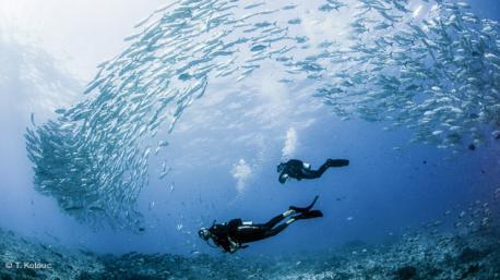 vous êtes au paradis de la plongée à Tahiti et dans les Tuamotus
