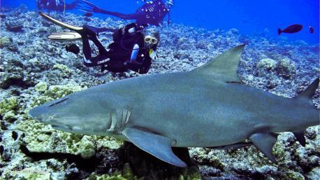 maginifique croisoère plongée en Polynésie