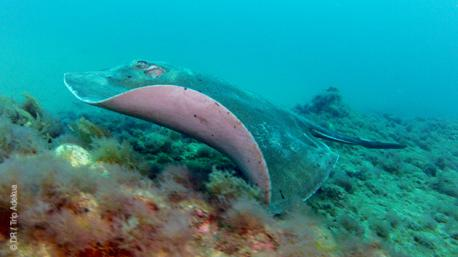 Séjour plongée passionnant à Gran Canaria, en Espagne