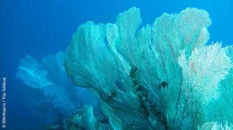 Entre gorgones et éponges, découvrez les trésors des eaux du Mozambique