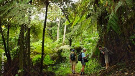 Un circuit trekking au Cameroun dans la forêt équatoriale à la rencontre des Pygmées bakas